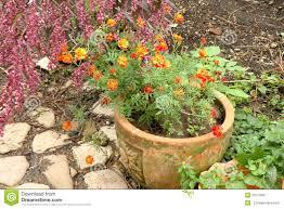 nice flowers in garden stock photo image 50773487