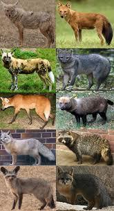 canidae wikipedia