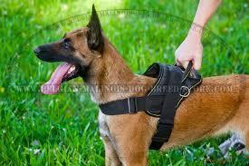 belgian shepherd standard get belgian malinois nylon harness