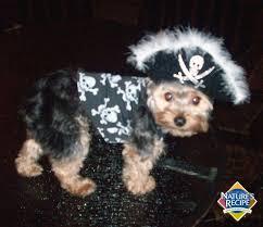 Yorkie Costumes Halloween 80 Pet Halloween Costumes Images Pet Costumes