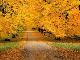 imagenes de otoño para fondo de escritorio fondos de pantalla de ciudades en otoño en hd gratis para descargar