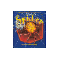 the life cycle of a spider book spider life cycle book