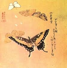 the of the japanese butterfly hubpages