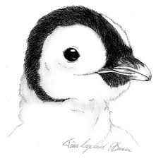 pingu the baby emperor penguin by superzebra on deviantart