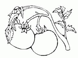 coloring pages tomatoes 745535 coloring pages for free 2015