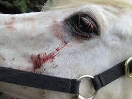 Signs Of Blindness In Horses Equine Eye Problems Types And Fixes