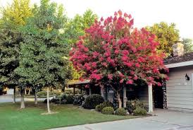 best trees for your yard homesteading and livestock