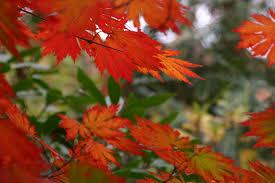 fall color u2013november highlights erica glasener
