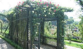 pergola wrought iron garden trellis shocking rot iron trellis