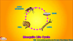 life cycle video for kids science learning from makemegenius com