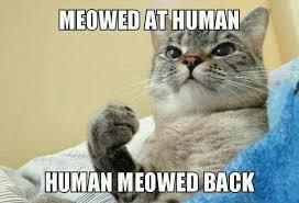Lovers Meme - cat lovers will understand meme funny goblin