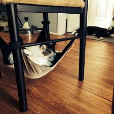 cat hammock u2013 mojotrend
