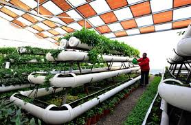 modern green house solar greenhouse boosts modern agriculture business chinadaily