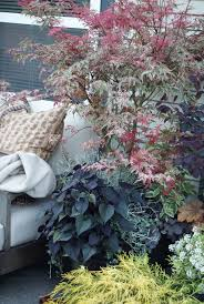 Container Gardening Potatoes - 1651 best container garden 2015 images on pinterest container