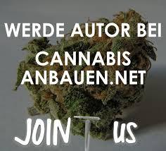 cannabis im garten cannabisanbauen net die 1 f纜r deinen grow junior gong
