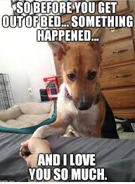 Smiling Dog Meme - dog in bed meme restate co