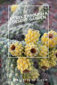 sonoran desert native plants trek a love affair with the sonoran desert photo essay