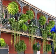 Nola Flags New Orleans Homes And Neighborhoods Hanging Ferns Balconies And