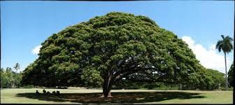hitachi tree