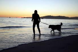 dog friendly beaches in santa barbara