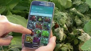 Plant Disease Diagnosis - the plant doctor app helping to identify plant disease euronews
