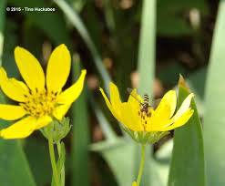native plants and wildlife gardens the living garden gardening know how u0027s blog