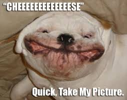 Funny Dog Face Meme - silly animal pictures with captions animal pictures with captions