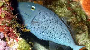 u s cuba to jointly protect study marine life science aaas