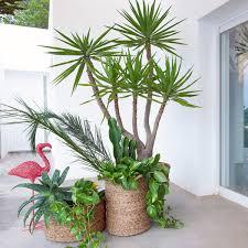 plante verte dans une chambre jungle plante verte d intérieur et cache pot déco plantes