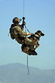 belgian shepherd navy seals affordable purebred working breeds purebred working dogs