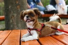 Gambar anak anjing berjalan taman binatang menyusui kacamata