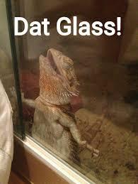 the best lizard memes memedroid