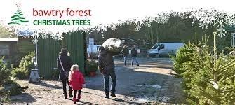 christmas trees at bawtry forest doncaster yorkshire and botany