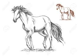 running white horse pencil sketch portrait mustang with stamping
