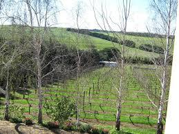 Geelong Botanic Gardens by Country House Waybourne Vineyard And Winery Geelong Australia