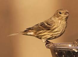 Backyard Wild Birds by Wild Birds Unlimited Top 30 Backyard Birds I Novato Ca