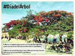 mexico celebrates national tree day diadelarbol planeta