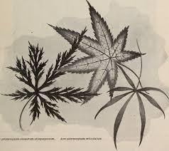 file descriptive catalogue of ornamental trees shrubs vines