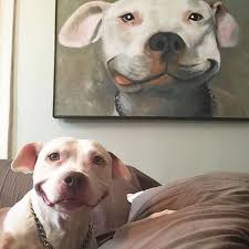 Smiling Dog Meme - i can has cheezburger imitation funny internet cats cat memes