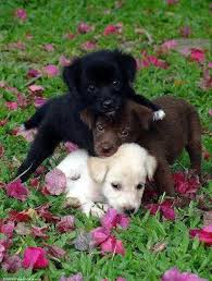 Are All Dogs Colour Blind 84 Best Dogs And Puppies Images On Pinterest Animals Funny