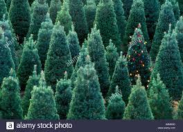 christmas christmas tree farms near memphis mercer mochristmas