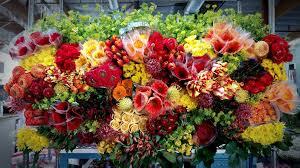 flower wholesale wholesale strelitzia flower company