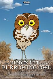 the owl pages forum view topic burrowing owl animated film
