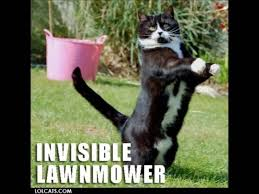 Invisible Cat Memes - 50 most funny cat meme pictures and images