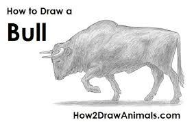 draw bull