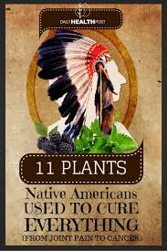 native american edible plants cherokees believe that they were given herbs and plants by their