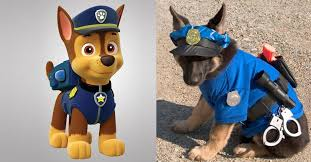 10 paw patrol dogs girly