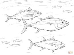 pacific bluefin tuna shoal coloring page free printable coloring