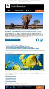 free e newsletter templates 10 tips for your nonprofit s email newsletter design wwf email newsletter design