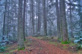 sanborn county park parks and recreation county of santa clara